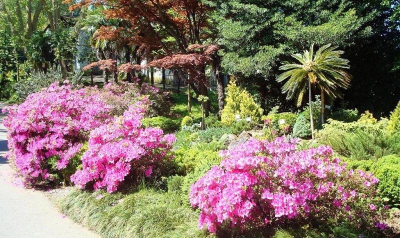 Ботанический сад города Батуми